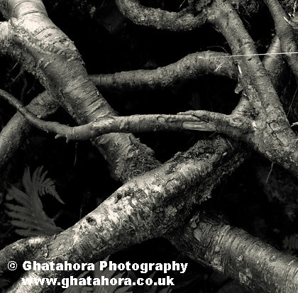 Lake District 2nd Photo (411) 